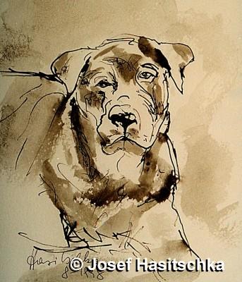 Hund mit Behinderung